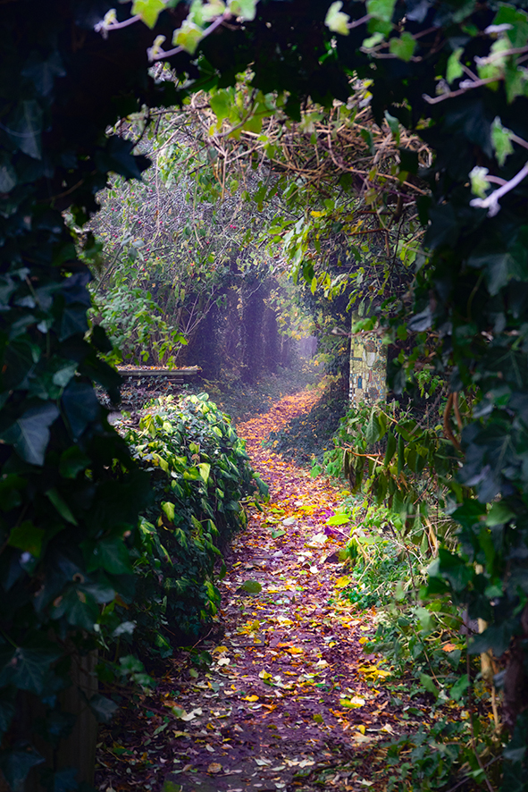Tuin  van de duisternis